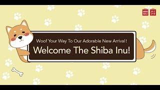 Shiba Inu in Merrylands store